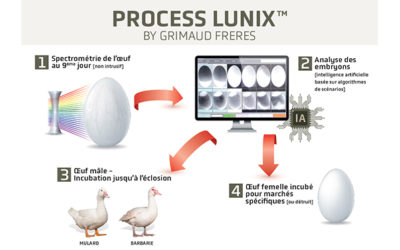 Animal Welfare Innovation : launch of in ovo sexing for Muscovy and Mule ducks